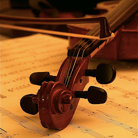 Violin by Richard Timothy Pyo - Artistic Objects Musical Instruments ( Music, Instrument, Contest, , object, musical, instrument )