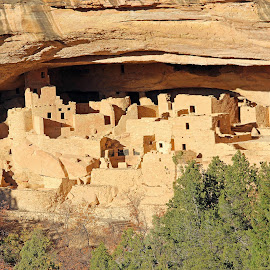 Cliff Palace by Kirby Hornbeck - Buildings & Architecture Public & Historical ( mesa verde, cliff dwellings, colorado, trees, national parks, rocks )