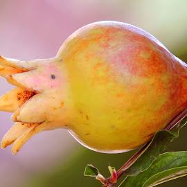 DALIM by SANGEETA MENA  - Nature Up Close Gardens & Produce (  )