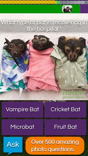 QuizTix: Animal Pics Quiz For PC