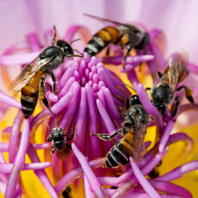 Busy Bees by Irshad Rahimbux - Nature Up Close Flowers - 2011-2013
