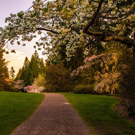 Evening Stroll by Judi Kubes - City,  Street & Park  City Parks ( peaceful, park, grass, green, quiet, dusk, blossoms, seattle, sunset, trail, path, trees, flowers, walk, renewal, forests, nature, natural, scenic, relaxing, meditation, the mood factory, mood, emotions, jade, revive, inspirational, earthly )
