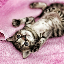 Cat by Alex Gutu - Animals - Cats Kittens