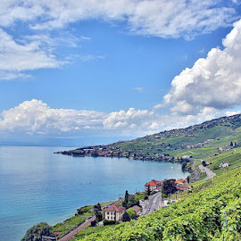 Summer in the Vineyards by Michael Schwartz - Landscapes Weather ( leman, vineyards, summer, july, lake )