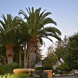 Taking an early evening stroll by Victoria Eversole - City,  Street & Park  Neighborhoods ( suburban lifestyle, california, sunset, street scene )