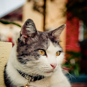 by Xen Xen - Animals - Cats Portraits