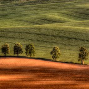 by Klaus Müller - Landscapes Prairies, Meadows & Fields ( waves, landscape,  )