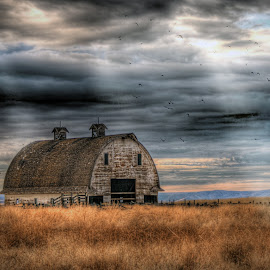 Rounded Roof Barn by Eric Demattos - Buildings & Architecture Decaying & Abandoned ( farm, ranch, barn, eric demattos, sunlight, storm, birds, sunbeam, rain )