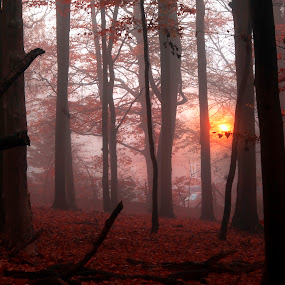 Village Lights. by Sorin Bogdan - Landscapes Forests ( uk, red, tree, chalfont, forest, light )
