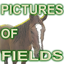 Images of Field