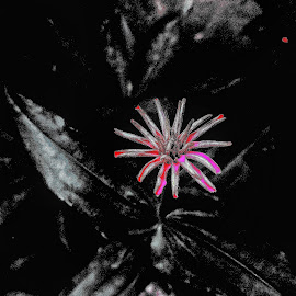 faded by Erl de Jose - Digital Art Abstract ( nature, art, artistic, abstract photography, flower )
