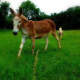 by Pj Graham - Animals Horses (  )