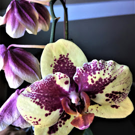 Last bloom by Carol Leynard - Instagram & Mobile iPhone ( bloom, plant, orchid, flower )