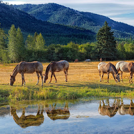 Sweet Grass as the Waterhole by Twin Wranglers Baker - Animals Horses ( horses, pond reflections, horse, meadow, appaloosa, appaloosas )