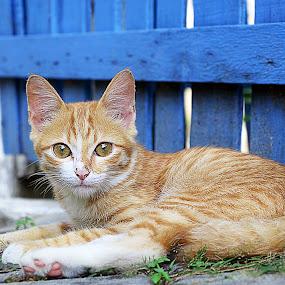 by Andrya P - Animals - Cats Portraits