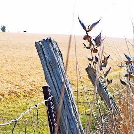The fence post by Patti Pappas - Landscapes Prairies, Meadows & Fields ( field, fence, michigan, fence post, fields )