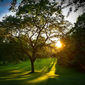 Tree in A Park by Mehul V - City,  Street & Park  City Parks ( sunrise, tree, park )