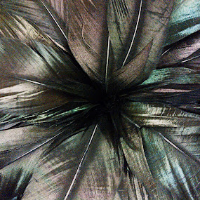 by Stephanie Seward - Abstract Fine Art ( pattern, fine art, plume, round, feathers )
