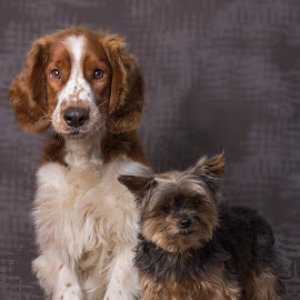 Marcel and Jubo by Anja Voorn - Animals - Dogs Portraits