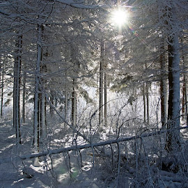 by Siniša Almaši - Nature Up Close Trees & Bushes ( up close, natural light, white, forest, landscape, sunlight, woods, depth, sun, nature, tree, shadow, snow, trees, view, light )