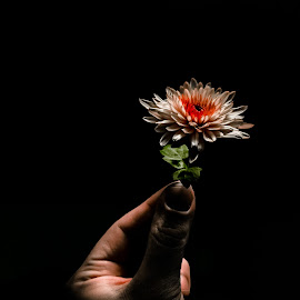 White flower by Martin Mák - Digital Art Things ( holding, art, samsung, close up, hand, mobilography, nature, mobile photos, background, digital art, dark, digital photography, closeup, flower, black )