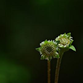 On the Spotlight by Prasanta Das - Nature Up Close Other plants ( wild, macro, flowers )