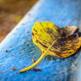 The fallen by Akash Banerjee - Nature Up Close Leaves & Grasses ( bright, brown, dof, yellow, leaffallen, leaf )