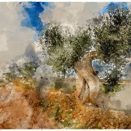 Murge by Alessandro Calzolaro - Painting All Painting ( countryside, watercolor, nature, painting, manipulation, retouch, olive )