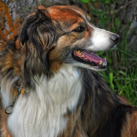 Sage Portrait - 0393 by Twin Wranglers Baker - Animals - Dogs Portraits