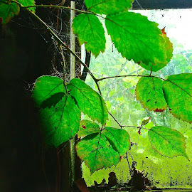 The Last of Us by Glyn Lewis - Nature Up Close Leaves & Grasses ( old, neglected, window, ruin, brambles, ramshackled, decay,  )