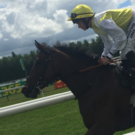 Slow Canter by Andrew Wilkinson - Animals Horses ( newbury )