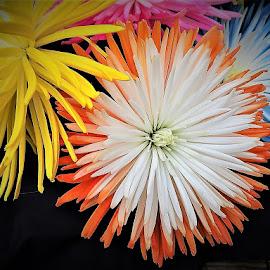 by Mary Gallo - Flowers Flower Arangements ( orange, nature, blue, flower arrangements, yellow, flowers )