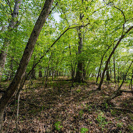 unity village MO by Joseph Martinez - Landscapes Forests ( forests, stock, outdoor photography, nature, trees, forest, nikon )