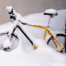 Yellow Bike by Wendy Richards - Transportation Bicycles ( bike, bycicle, saddle, snow, tyres, yellow, tread,  )