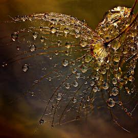 Belonging To Eternity by Marija Jilek - Nature Up Close Natural Waterdrops
