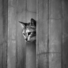 by Omiq Qsm - Animals - Cats Portraits