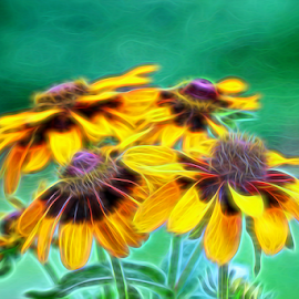 by Dipali S - Digital Art Things ( rudbeckia triloba, black-eye, ox-eye, bright, sun flower, daisy, yellow, botanical, macro, nature, foliage, flower, petal, sunlight, season, aster, outdoors, gloriosa, natural, floral, outside, plant, botany, colorful, vivid, sunflower, beauty, pretty, blossom, black-eyed susan, asteraceae, perennial, fresh, coneflower, closeup, rudbeckia, flora, green, bloom, rudbeckia hirta, color, wildflower, background, summer, gardening, brown, yellow ox- eye daisy, garden, black-eyed, growth )