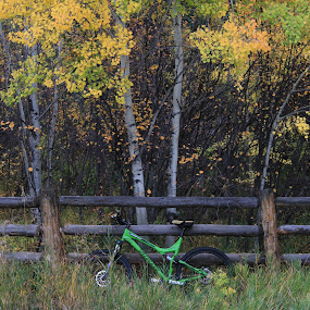 mountain bike by Nick Sweeney - Novices Only Sports ( speed, fall, mountain bike, trees )