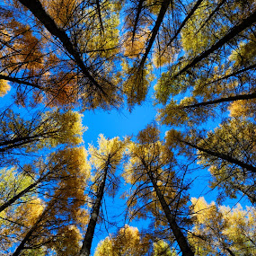 Prisoner of trees by Anthony Lau - Abstract Patterns ( abstract, blue sky, pattern, autumn leaves, wood, green, forest, brown, lines, yellow, tall trees,  )