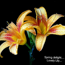 Spring delight...  by Asif Bora - Typography Quotes & Sentences