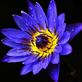 Teratai by Doeh Namaku - Nature Up Close Flowers - 2011-2013 ( photographer, taking photos, pwc75 )