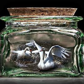 Bottled Swans by Sue Bernhard - Smith - Digital Art Things ( things, bottle, bottled, birds, swans )