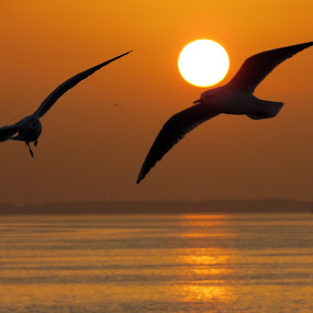 sunset and birds by Yahia  husain - Landscapes Sunsets & Sunrises ( sunsets, sunset, sea, beach, birds )