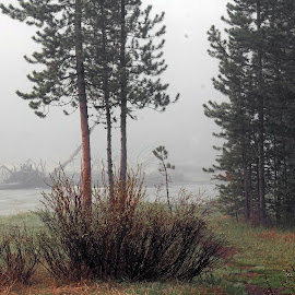 Mist and Orbs by Eric Hansen - Landscapes Forests ( yellowstone, mountains, foggy, forest, orbs, pine trees, misty )