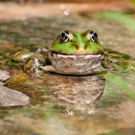 by Thomas Berwein - Animals Amphibians