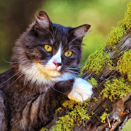 Cat Claws and Moss by Twin Wranglers Baker - Animals - Cats Portraits ( cat, climbing tree, moss, feline )