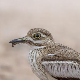 by Nobby Clarke - Animals Birds
