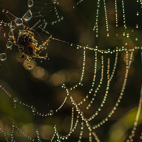 by Lorenzo Moggi - Nature Up Close Webs