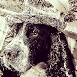 by Johnny Ljung - Animals - Dogs Portraits ( dogs, pet, pets, dog portrait, dog show )