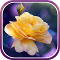 App Roses Wallpaper APK for Kindle